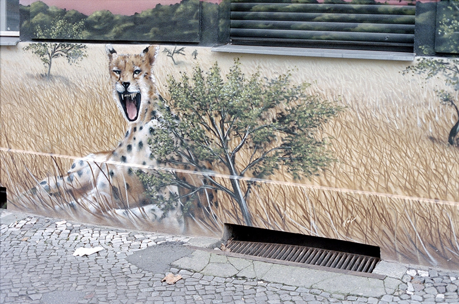 http://florianthein.de/files/gimgs/th-25_cheetah_11907705085_o.jpg
