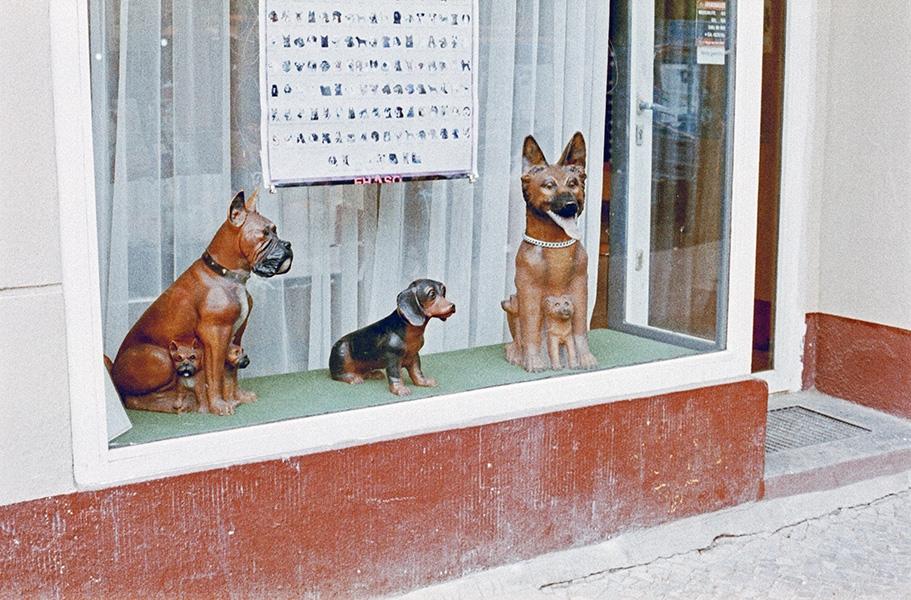 http://florianthein.de/files/gimgs/th-25_dog-parlor_9219264151_o.jpg